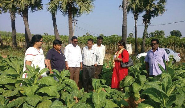 India: A One-Stop Destination for Tobacco