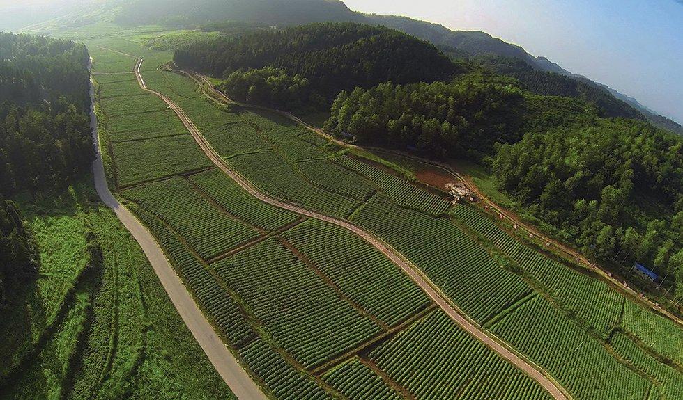 China Aims to Increase Tobacco Farmers' Income