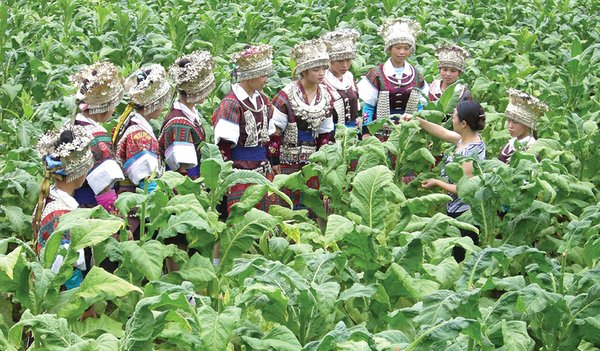 China Aims to Increase Tobacco Farmers' Income
