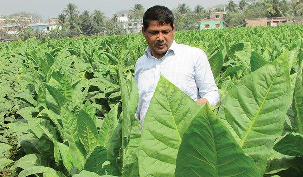 18i3_Bangladesh_Tobacco