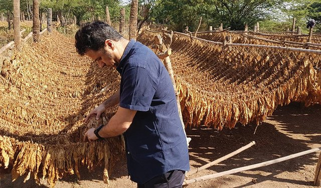 From Hong Kong to Zimbabwe: Independent Leaf Suppliers