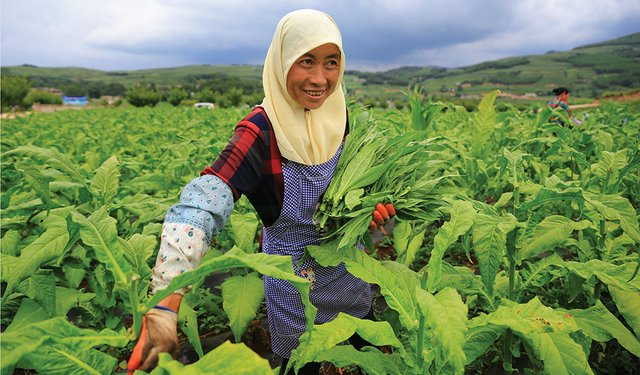 Innovative Changes in Tobacco: A Case Study of Tobacco-Cultivation Areas in Guizhou, China