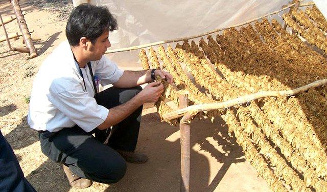 Oriental Tobacco: Important Yet Under the Radar