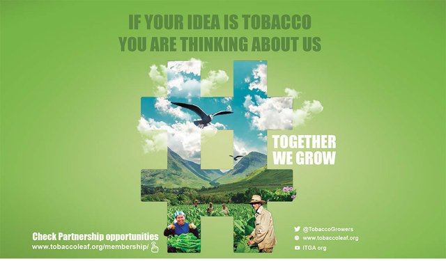 The Future of Tobacco Growing