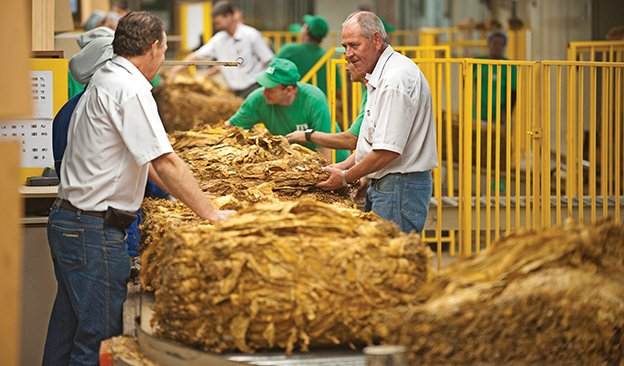 Brazil: Tobacco Export Powerhouse