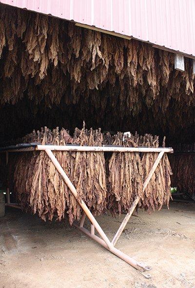 us-tobacco-season-400-a.jpg
