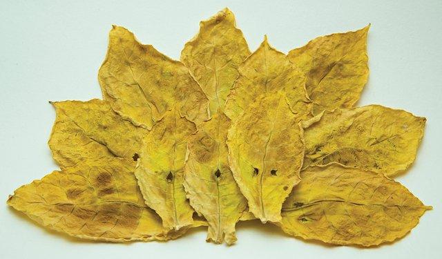 TA16i3-Oriental-leaf.jpg