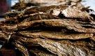 Dark Air-Cured Tobacco in Asia