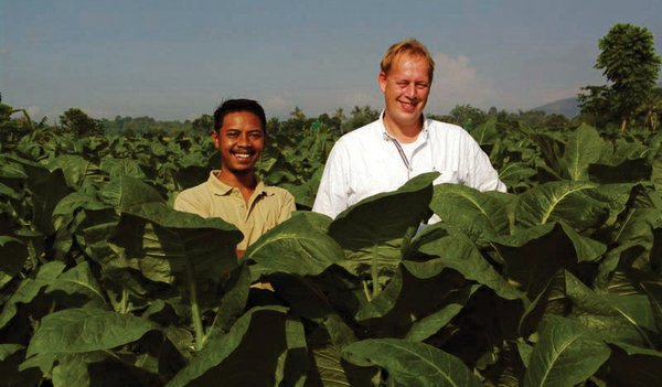High-Quality Leaf from Indonesia The Merchants' P.O.V.