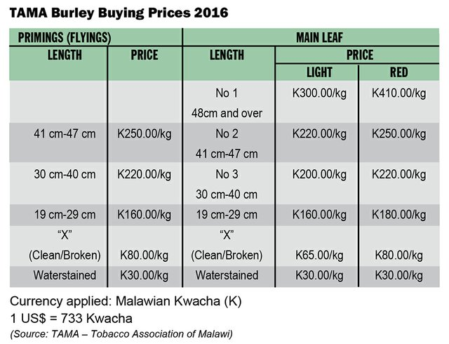 Malawi: Premium Burley to the World