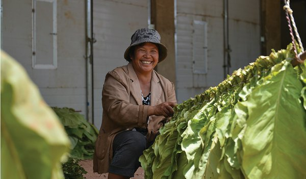 China Increases Growers' Earnings While Reducing Output