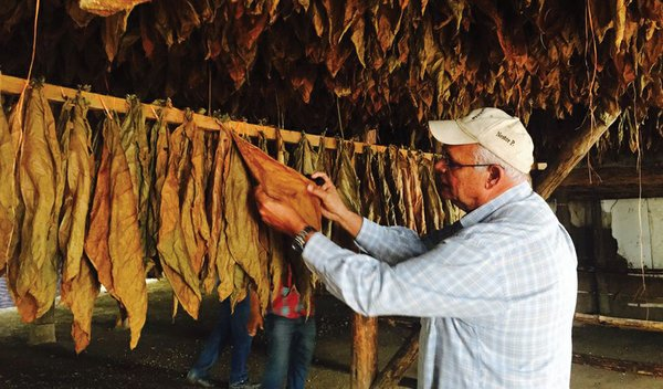 Cigars: Spotlight on Honduras