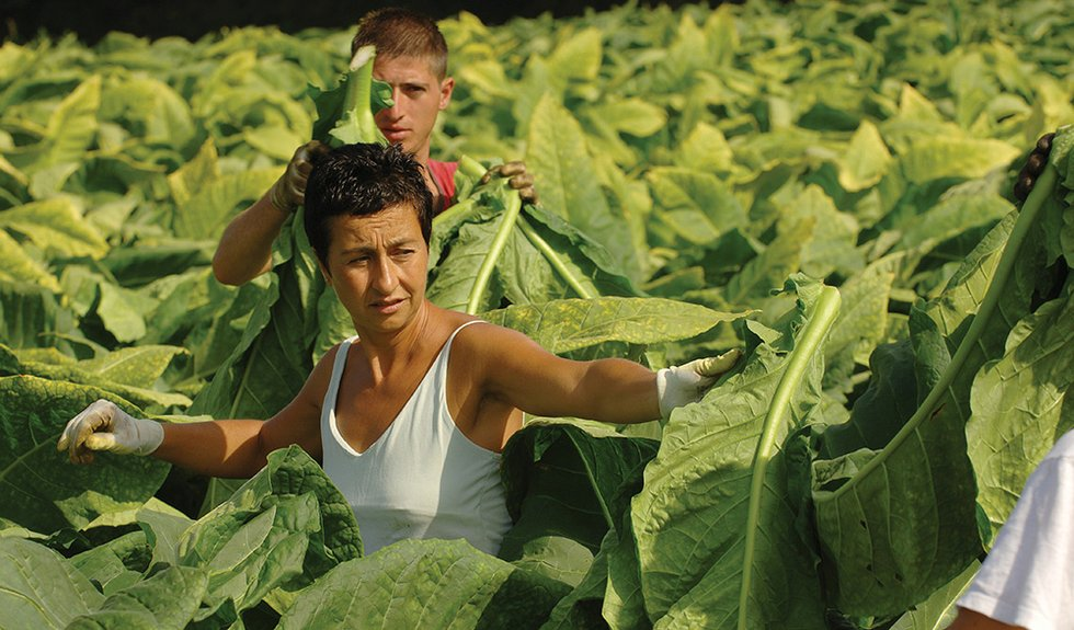 Passionate About Tobacco: Italy's Suppliers